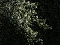 20070406